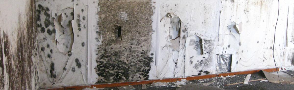 Skimmelsvamp på væggene, hvilket bør forebygges